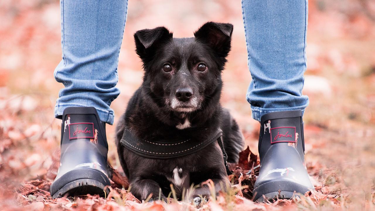 Ausbildung zum Hundetrainer